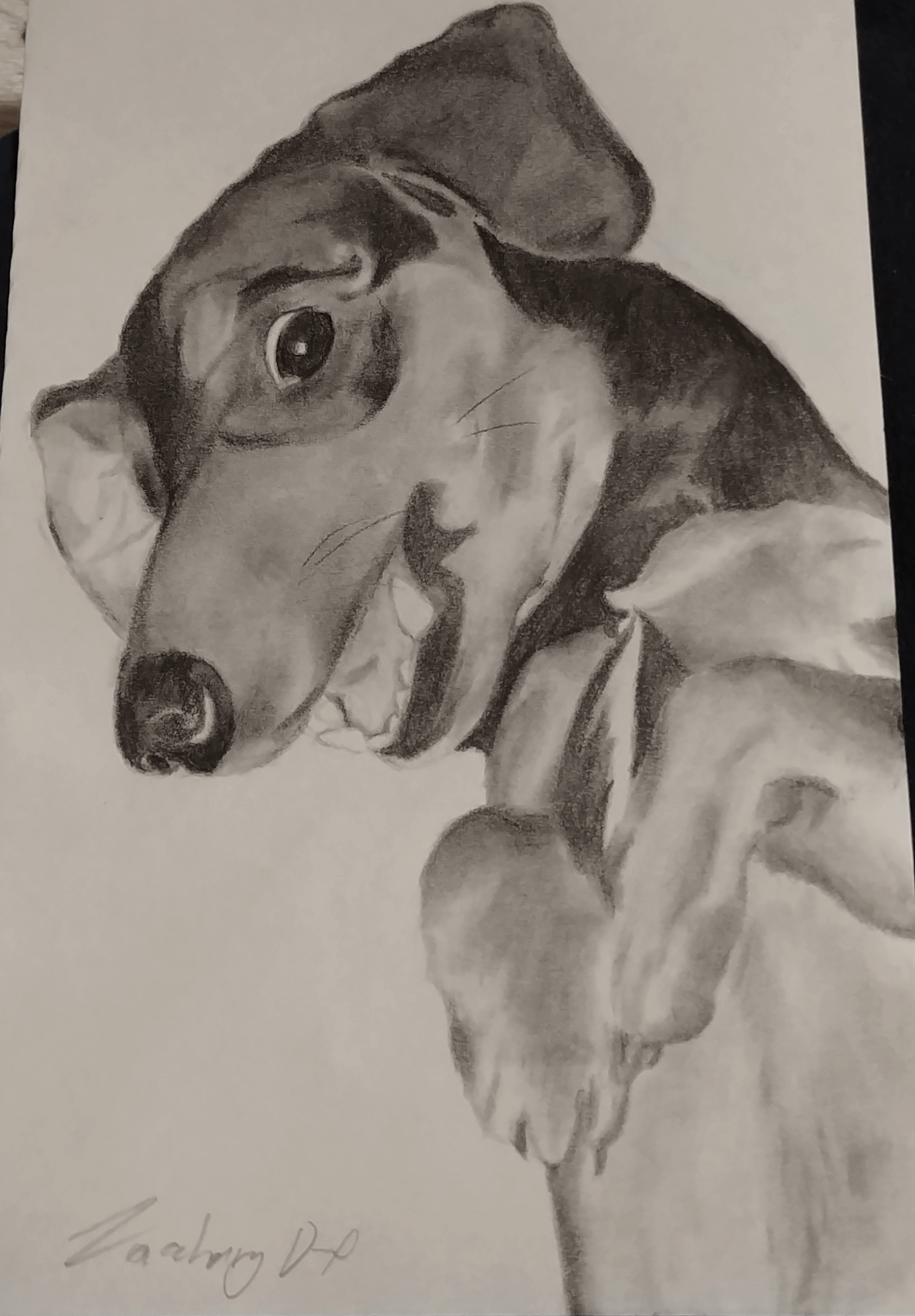 A pencil drawing of Khiron, my puppy, lying on his back with his paws in the air, smiling happily.