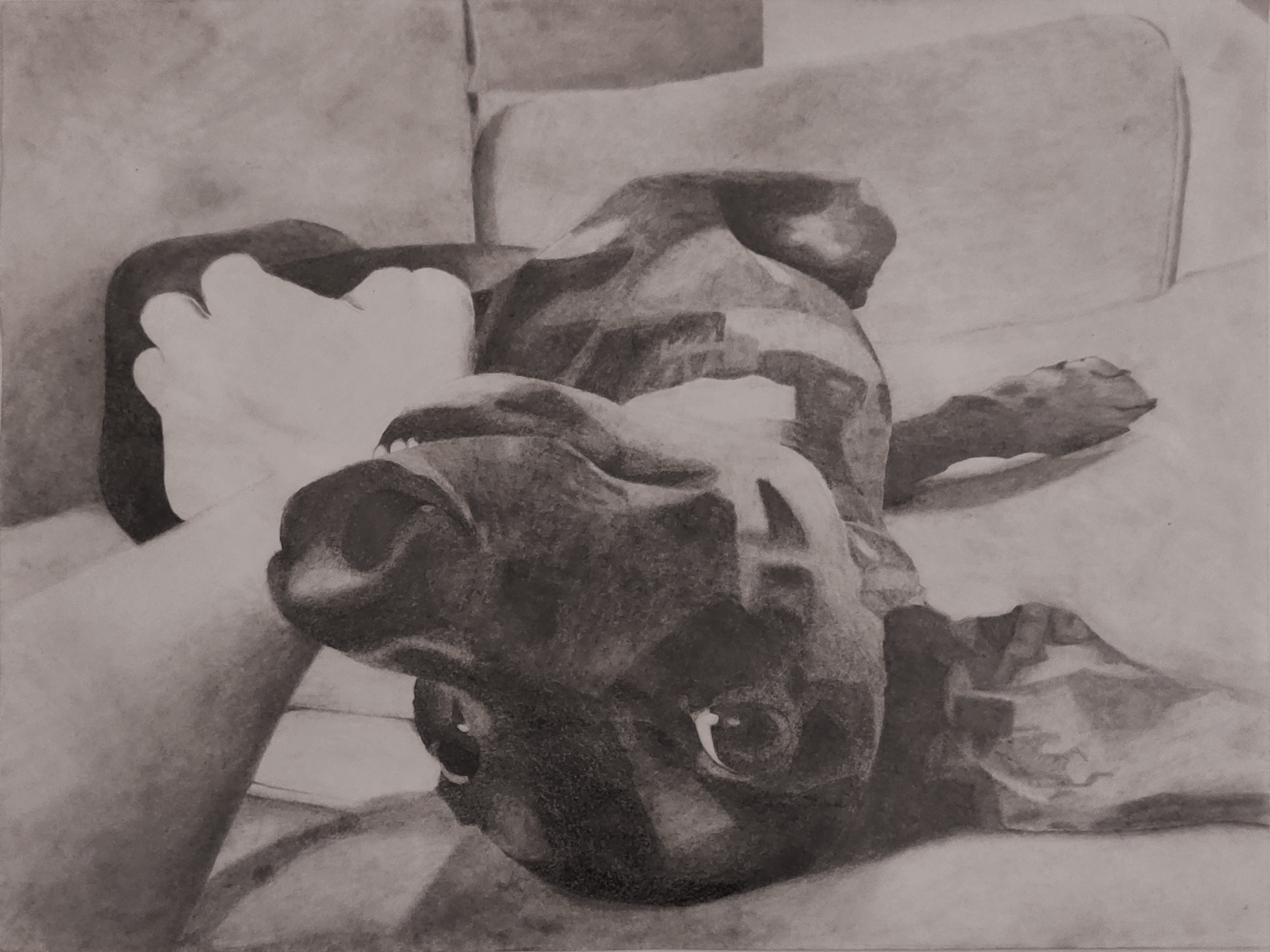A pencil drawing of Khiron, my puppy, on a poster-sized piece of paper.